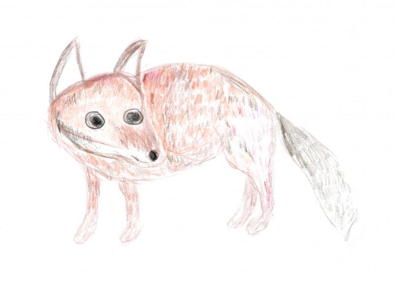 K drew this baby fox