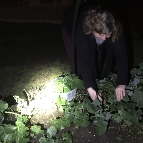 A visiting friend harvesting kale in our garden with help of a flashlight
