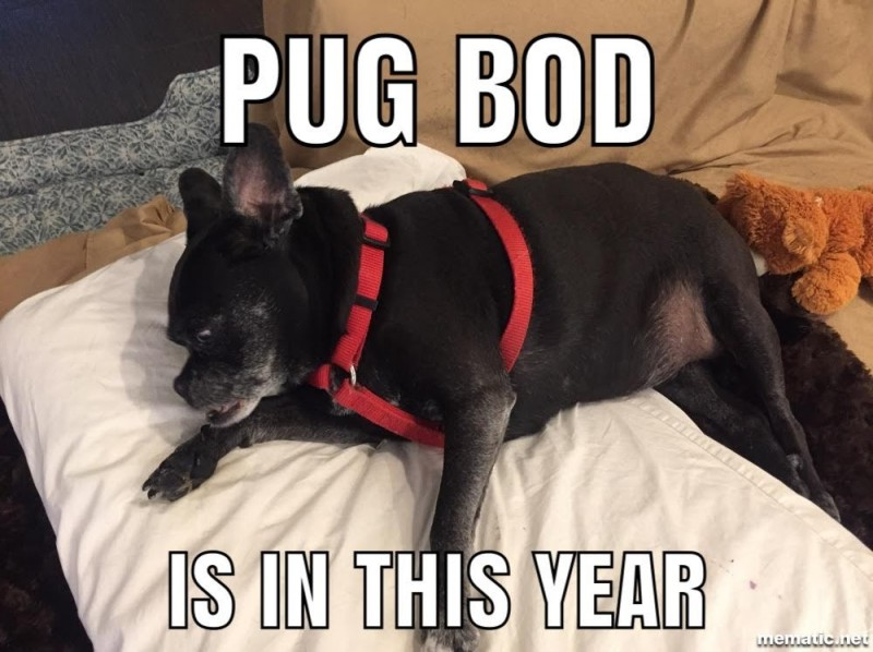 Pug Bod Is In This Year
