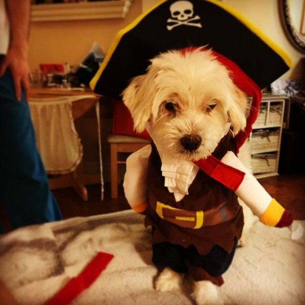 Not only do we take Halloween Seriously… so does our dog, Charlie!