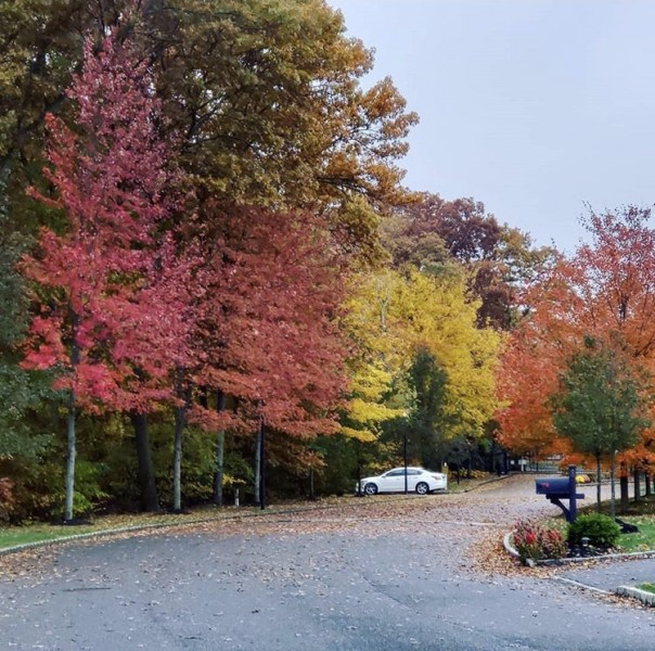 Our neighborhood in the fall