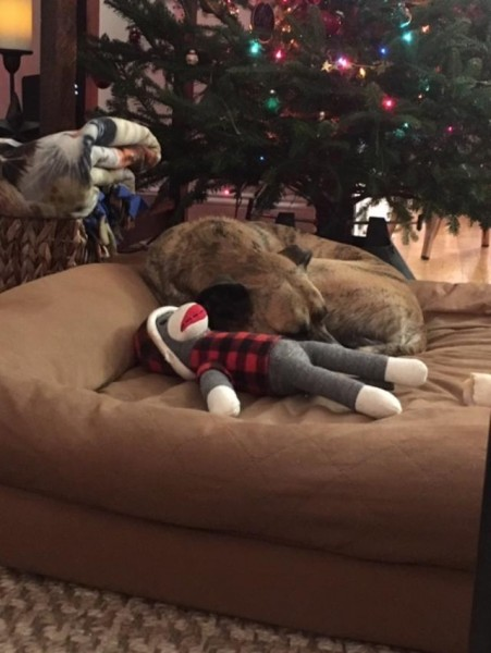 Christmas penny and monkey