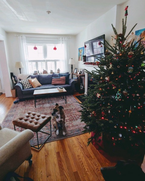 Family room at christmas 2
