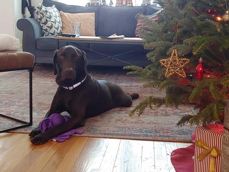 Max at christmas