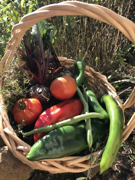 Garden harvest basket
