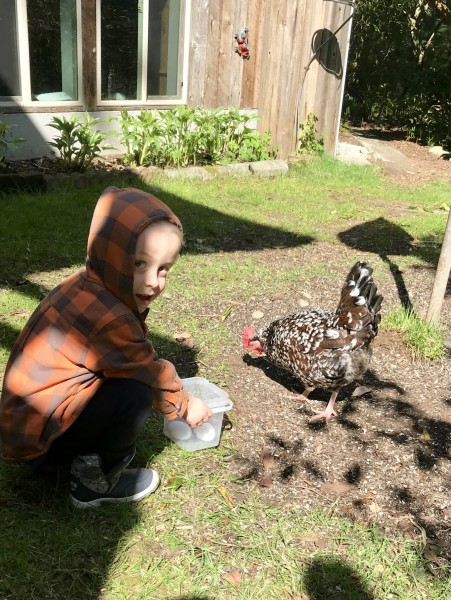 Odin and Lilly the chicken on Whidbey Island