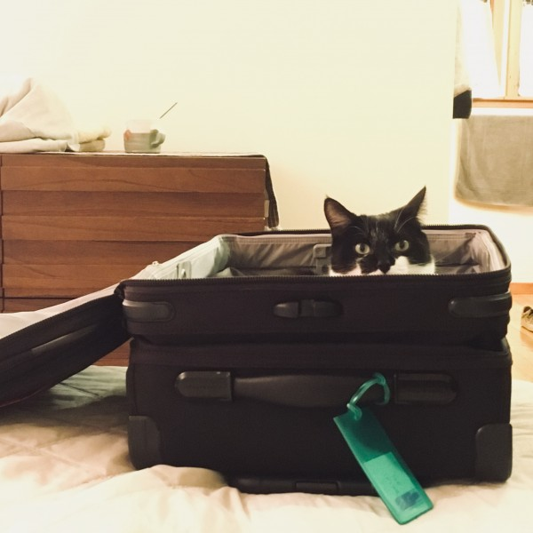 K is packing for a trip and kitty wants to come too!