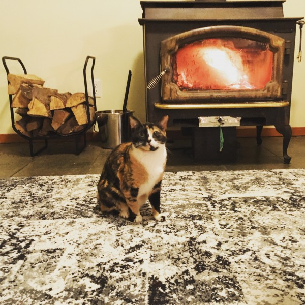 Cute cat and cozy fireplace