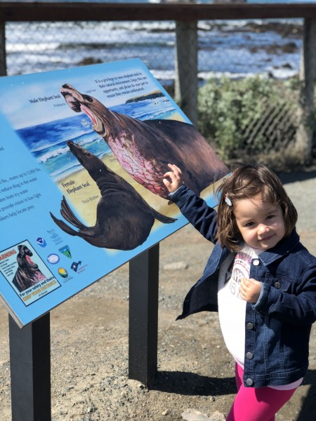 Learning all about the sea lions.