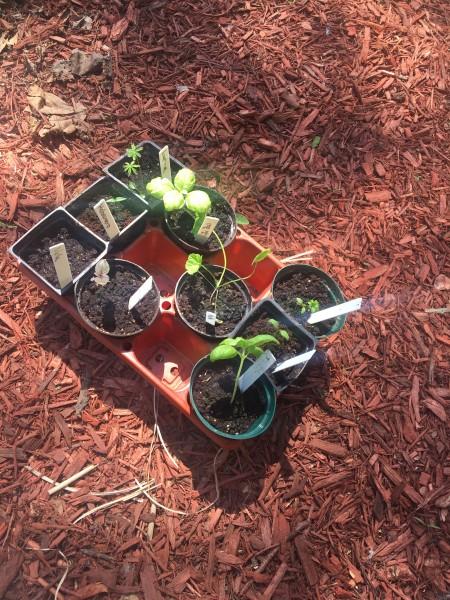 ready to start a garden