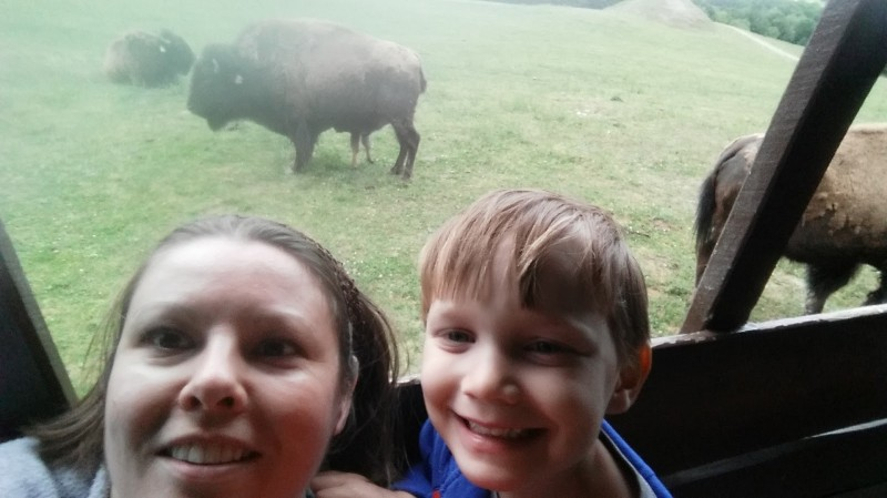 Checking out some buffalo!