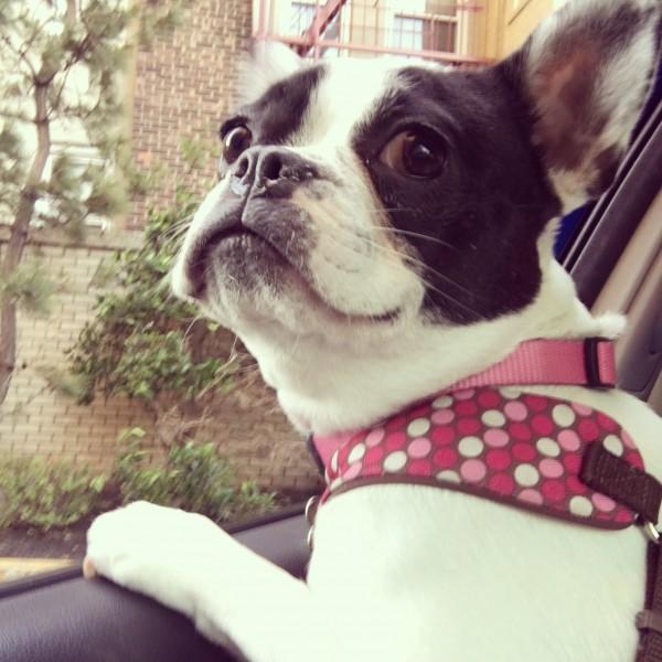 Car Rides!