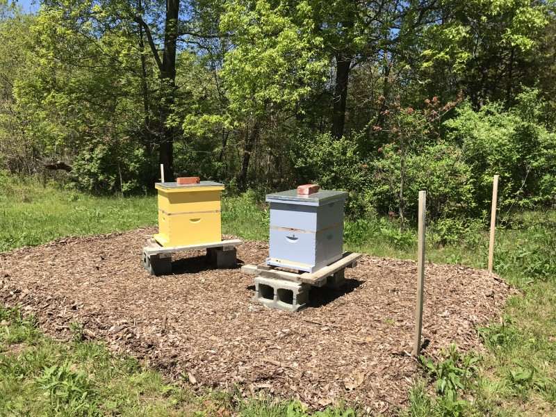Bee hives named Happy and Courage.