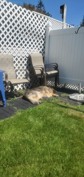 Bella working on her tan