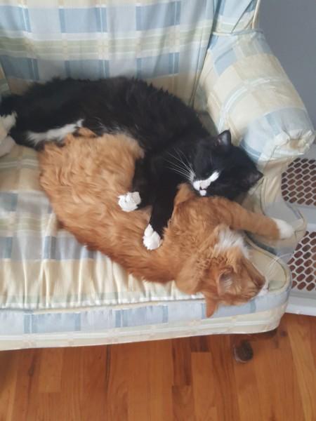 Hamstring and Calf Cuddling