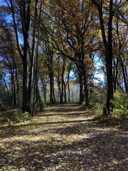 Behind our house is a scenic nature preserve called Pioneer Park, with lots of walking paths!