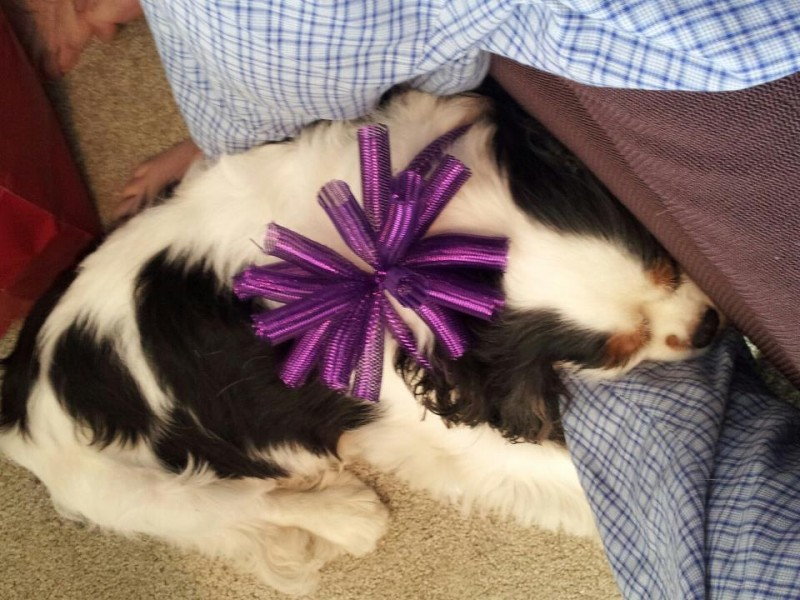 Wearing a fun bow while opening Christmas gifts with Ryan's family