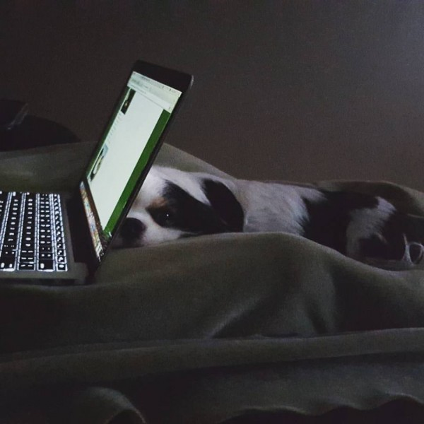Determined to beat the laptop for daddy's affection