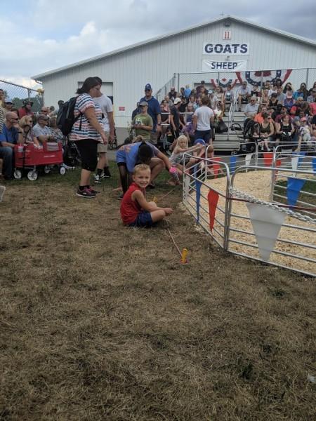 Watching piglet races