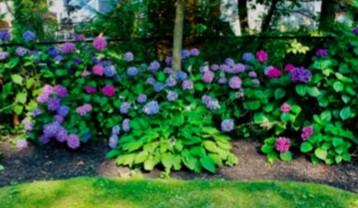 Our Backyard Garden. We Love To Garden.