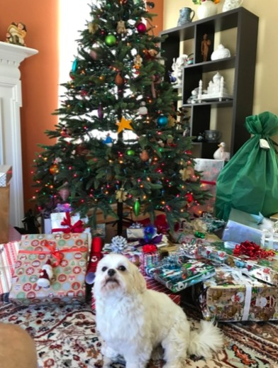 Christmas with my mom's sweet dog Ziggy.