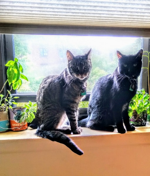 Our cats Chewie and Nero love hanging out in the kitchen window with Amys plants