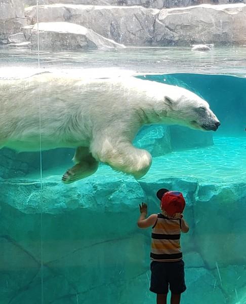 Loving on the Polar Bears