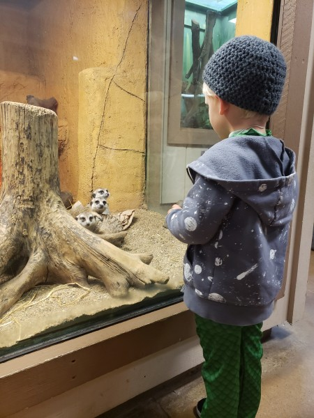 Checking out the meerkats