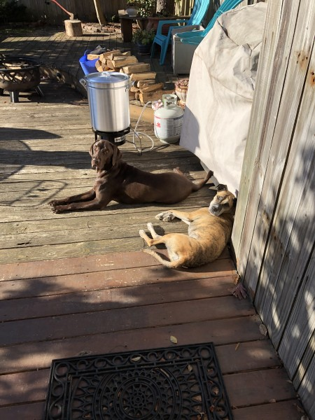 Max and Penny, sun-bathing and ready to help with the crabs