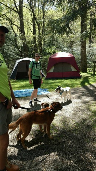 We were getting ready to go on a hike with the dogs.