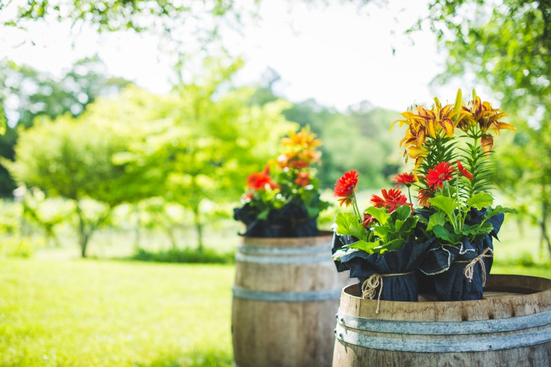 Flowers on wine barrels