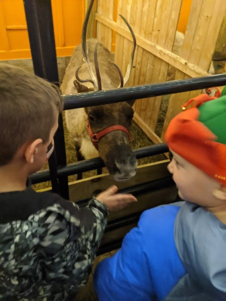 Meeting a reindeer