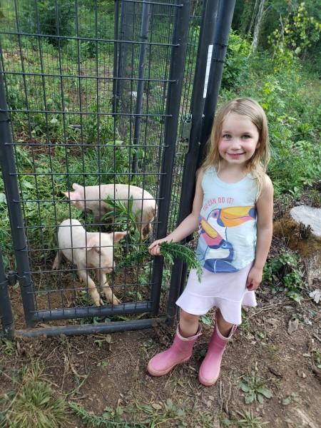 We got pigs!