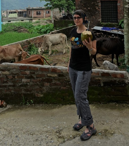 Cooling off in india with some coconut water and backyard cows.