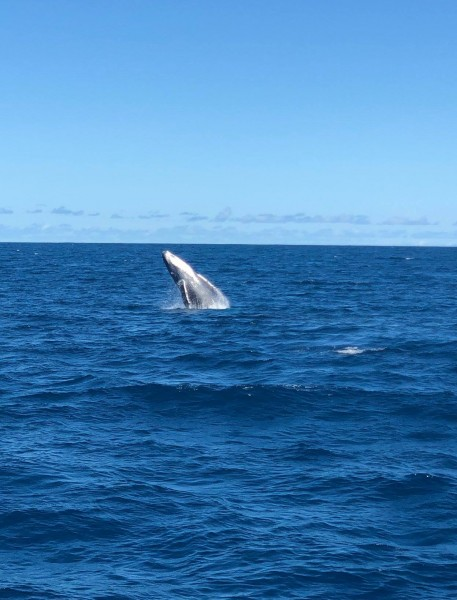A whale breeched the ocean in Hawaii!