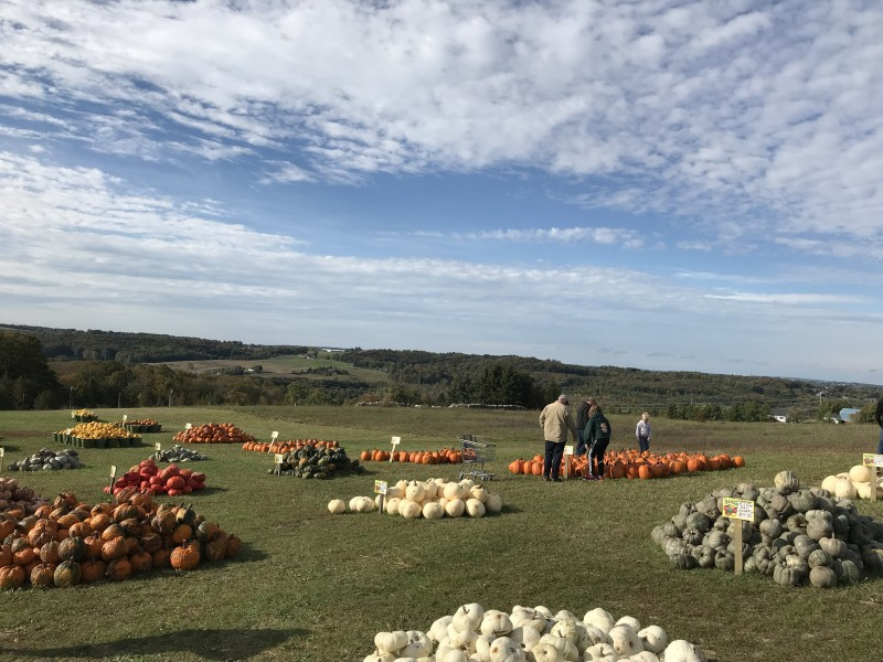 Local farm market view and pumpkins!