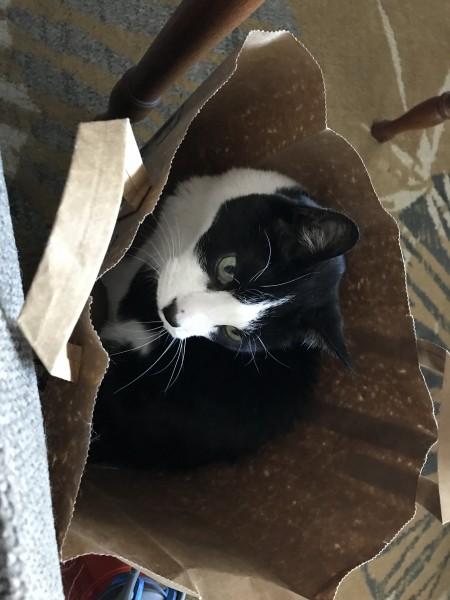 Willis looking cute in a paper bag