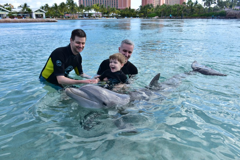 Swimming with dolphins on vacation in the Bahamas