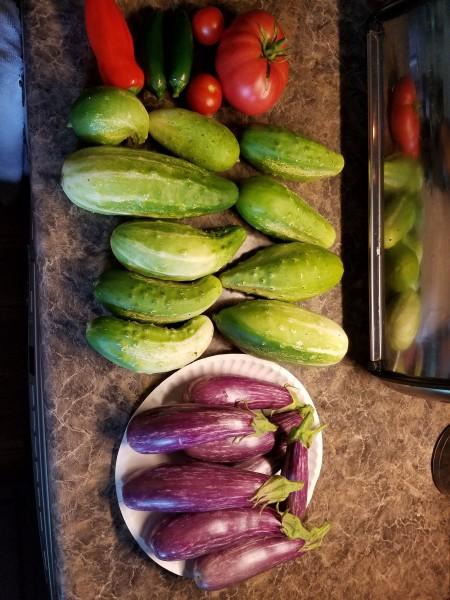 Cucumbers and Eggplant