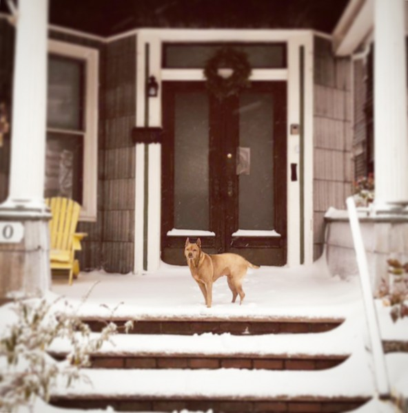 Charlie in the first bid snow at our house.