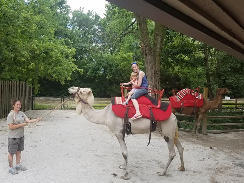 Riding a camel at the zoo
