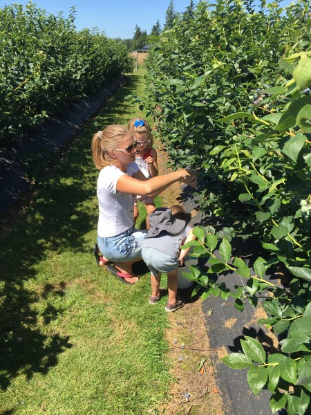 Picking blueberries is a family favorite.