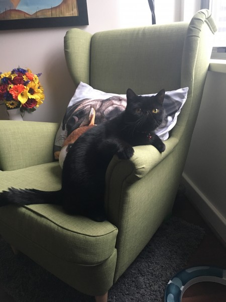Felix likes to sit like this on the chair