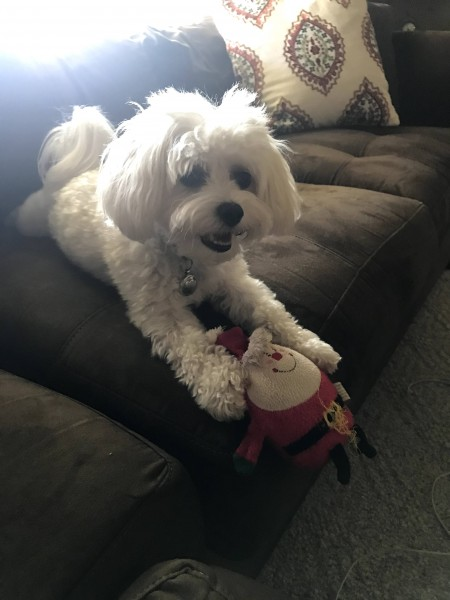 Lucy's favorite toy...Santa!