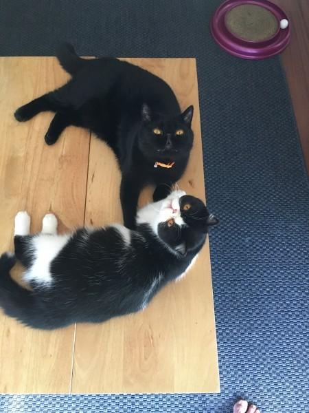 Felix and freyja