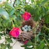 House finch made a nest at our front porch