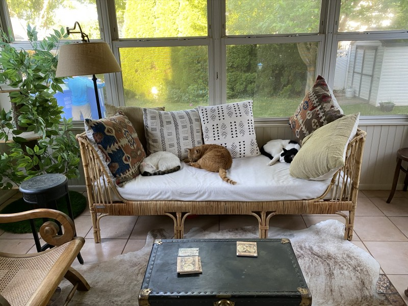 Gus (left), Hobbes (middle), Damien (right).  They love the sun room.