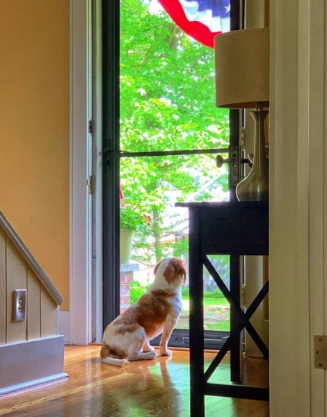 Gus keeping watch out the front door