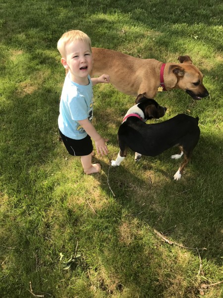 Our dogs love our nieces and nephews. They are so good with children