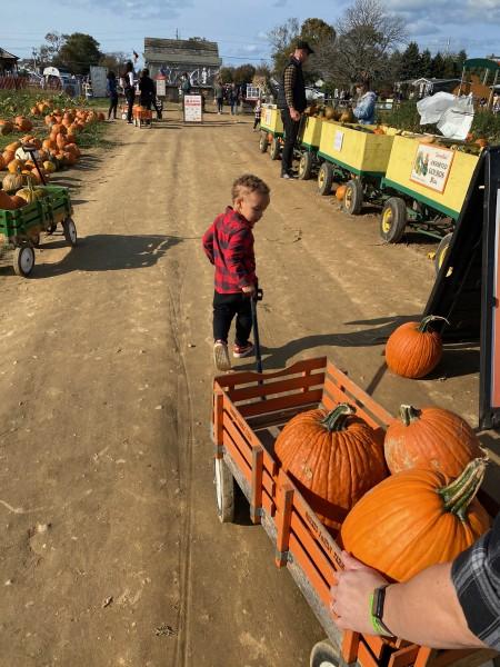 I found some pumpkins!
